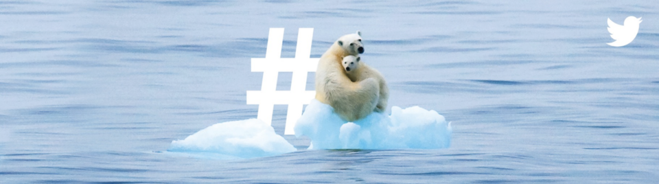 Twitter Billboard Bulletin Polarbears