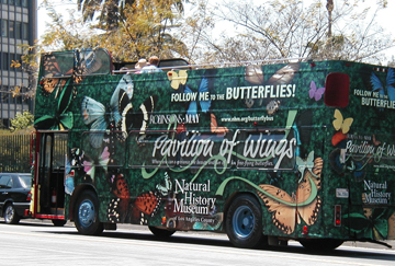 nhm_butterflybus_01