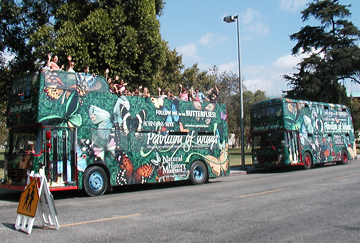nhm_butterflybus_02